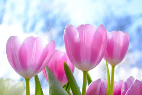 beautiful-bloom-blooming-1019475