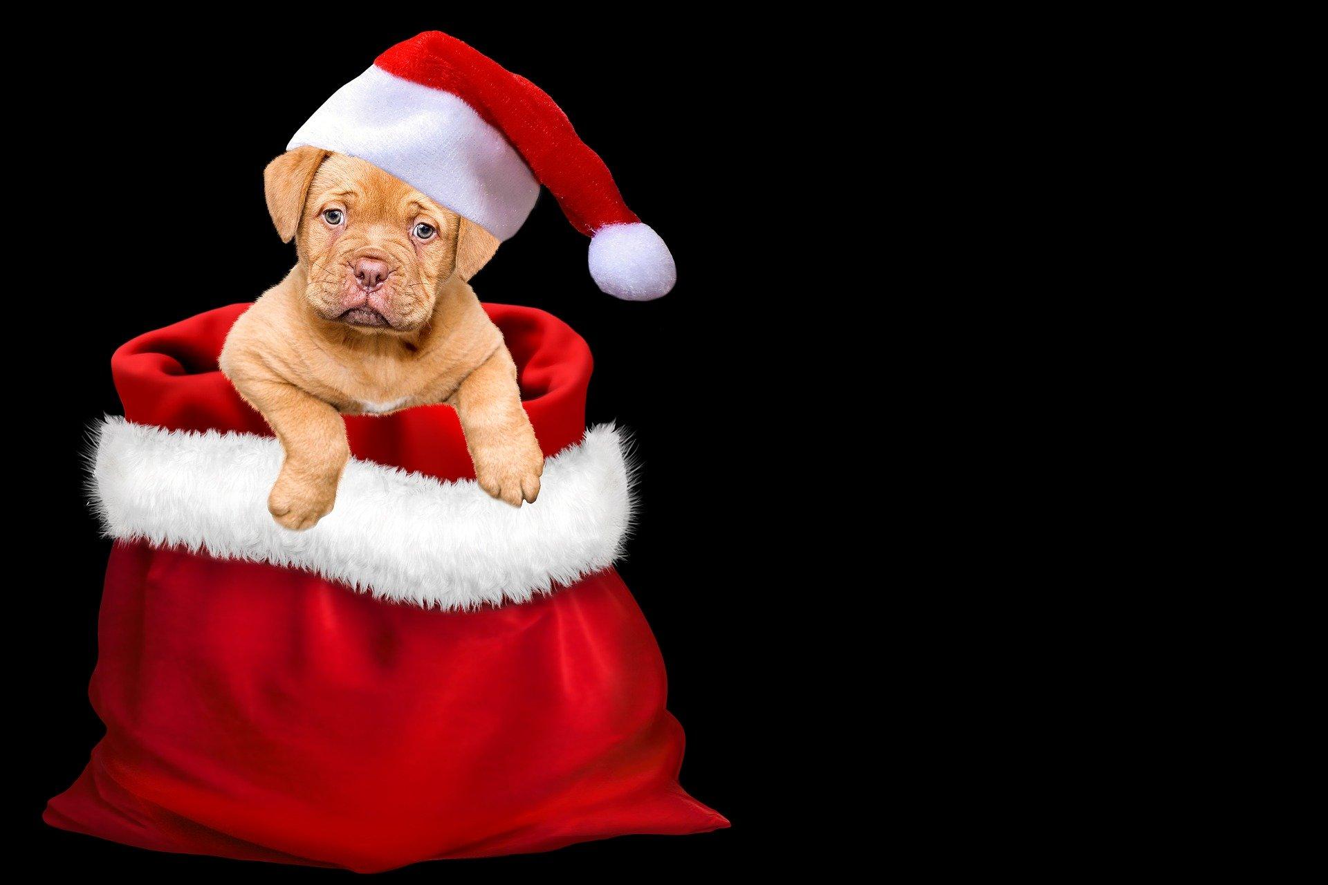 christmas-3001320_1920