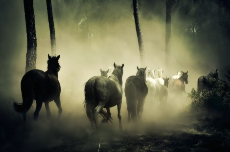horses-1759214_1920