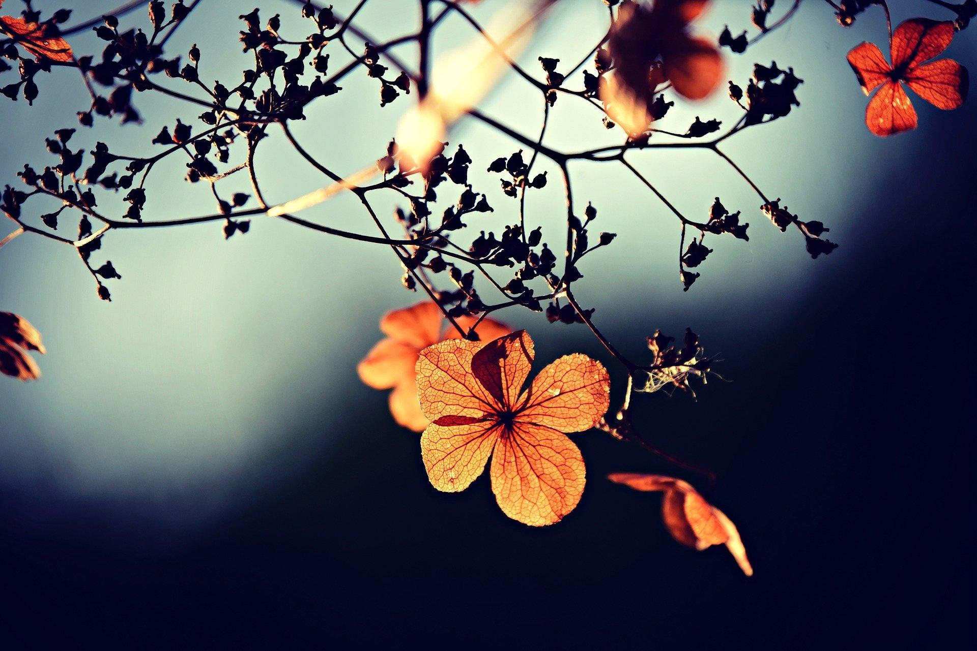 flower-3876195_1920